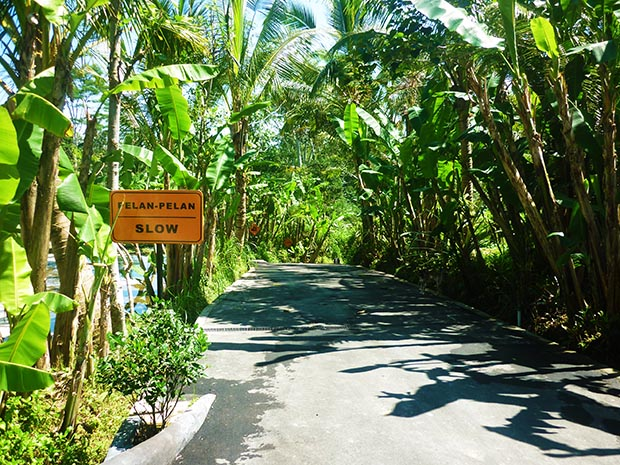 ジャングルバギーコース