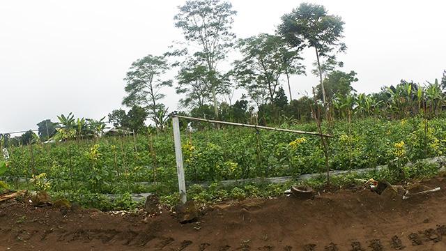 バリ島の畑を見学