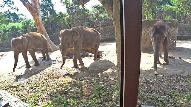 サファリジャーニー(象)