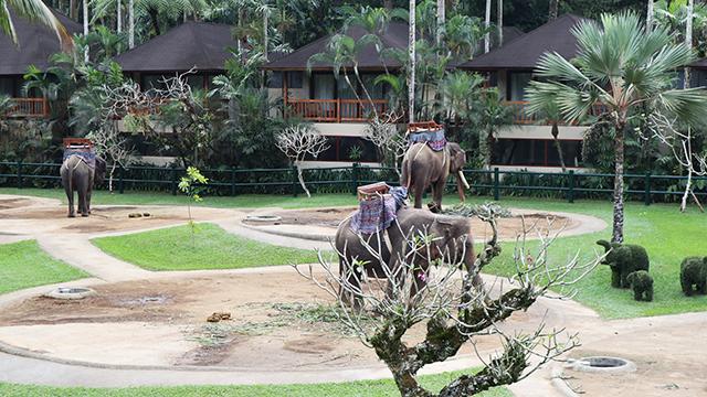 鰓ファンとパーク内の象達