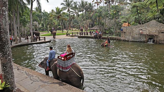 池の中を進む象